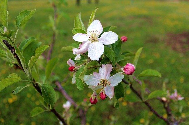 bílé květ